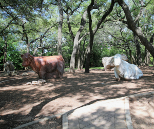 best places in the arboretum cows